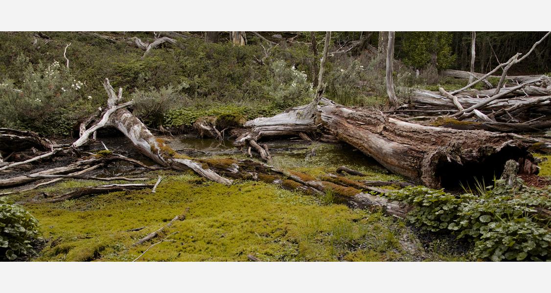 Tierra del Fuego Nationalpark