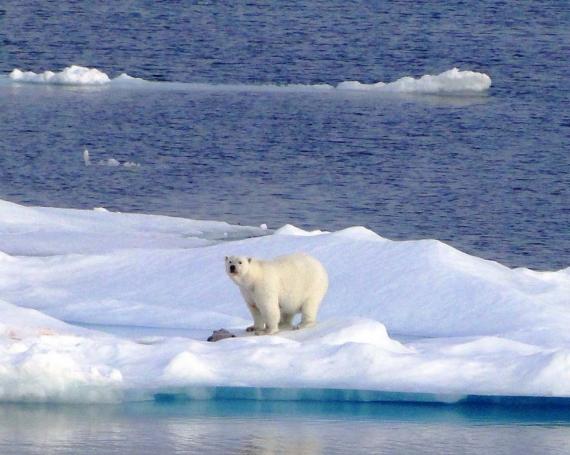 Arktis – Frostige Schönheit im Norden