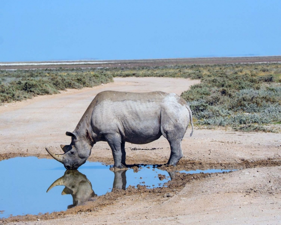 Namibia – zwischen Monotonie und Lebensvielfalt