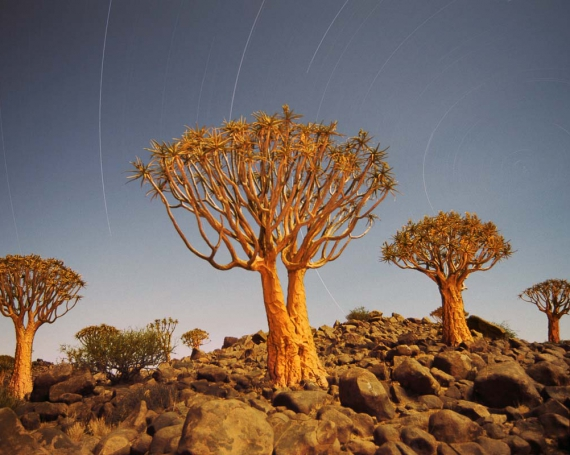 Nikon Travel – Fotoreisen nach Afrika