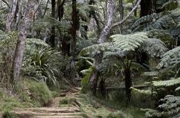 La Reunion Wandern Trekking Mehrtagestour 18
