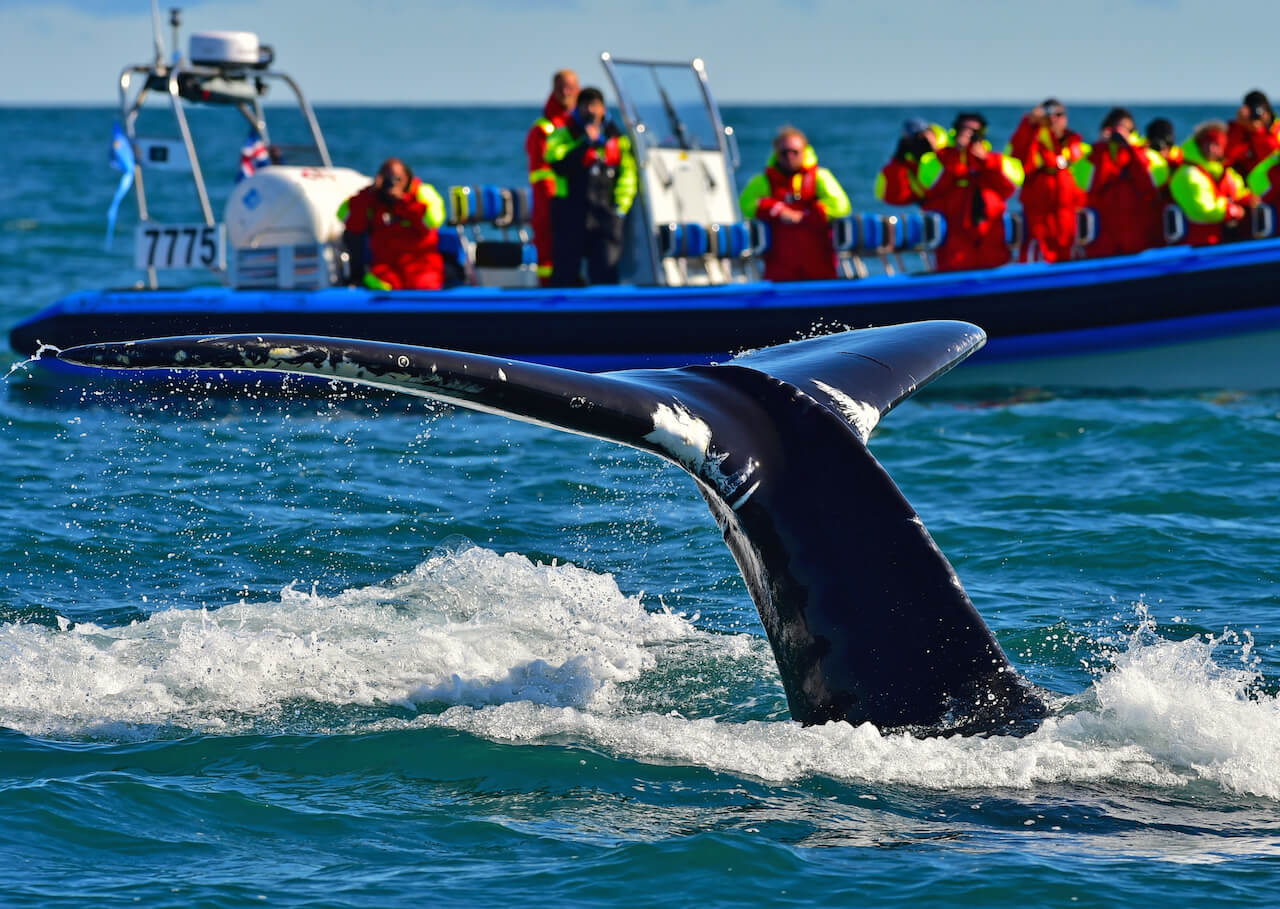 island whale watching