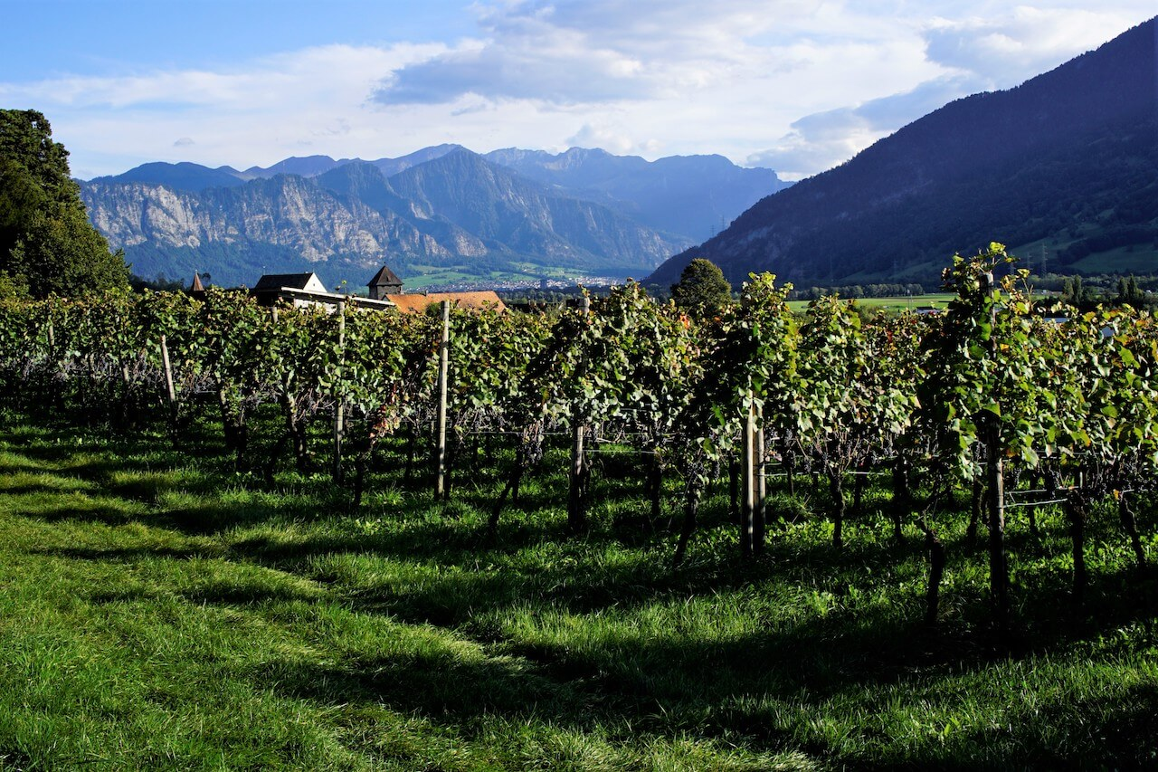 13_Wine Tours Switzerland (2)
