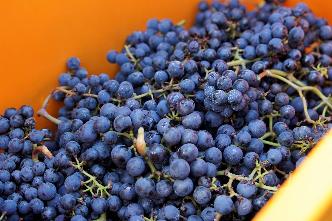 9_CasaNova Wein Pur (6)