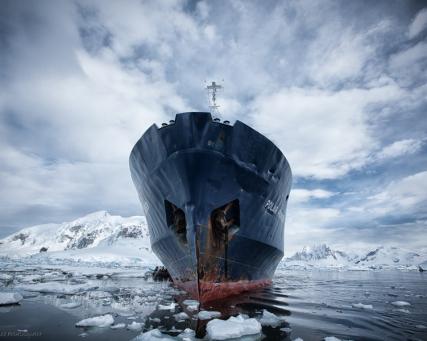 Frostige Bilder: Eisberge und Pinguine