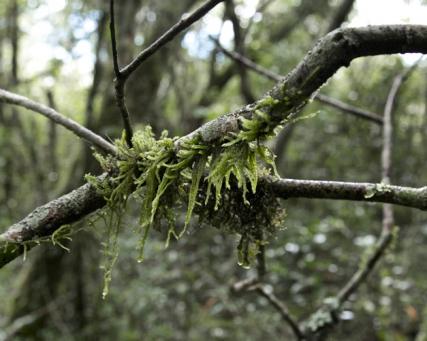 Faszinierende Wälder Amerikas