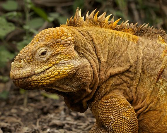 Galapagos – Zurück zum Ursprung