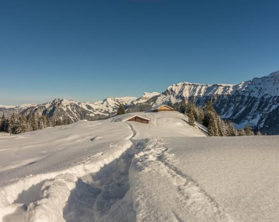 Schneeschuhwandern in der Jungfrauregion Mürren