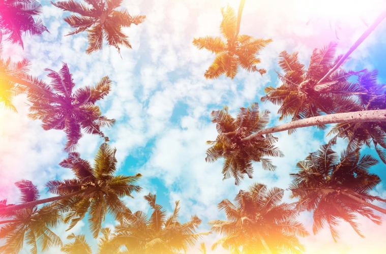 Coconut palm trees on tropical beach vintage nostalgic film colo