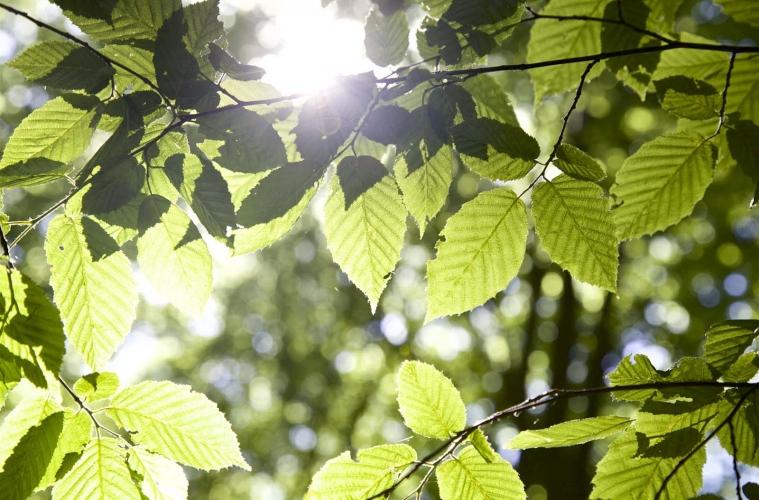 Uckermark Grumsiner Wald unesco weltnaturerbe 17