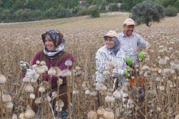 Phrygien_23 Opiumernte Feld