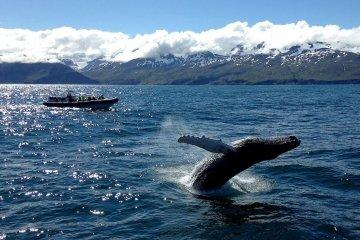 whale watching island